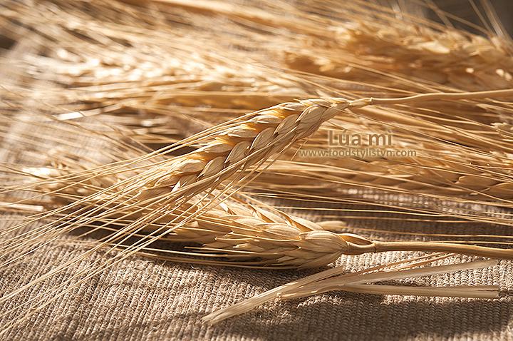 Lúa mì và bánh mì